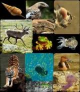 Гомойотермные організми. Теплокровні тварини. Пойкилотермные організми