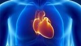 На 3D-принтере напечатали сердечной мышцы