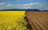 Чим агроекосистеми відрізняються від природних екосистем: поняття і порівняльна характеристика