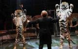 Киевсовет запретил цирки-шапито с животными