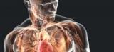Люди обнаружили второй иммунную систему