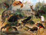 Зоогеография - це наука про тварин