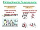 Фактори, що визначають розчинність білків. Фізико-хімічні властивості білків